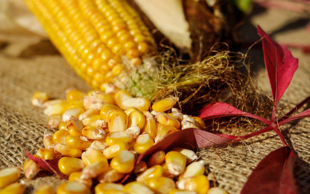Programajánló – XXII. Bábolnai Kukoricafesztivál